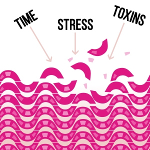 Time, Stress, and Toxins
